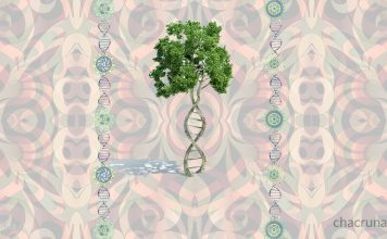 Psychedelic ayahuasca DNA