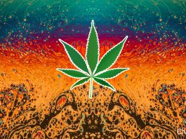 Psychedelic Legalization